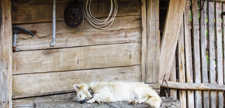 Mariya Boyanova Fotografie Foto-Essay aus einem Balkandorf Hund