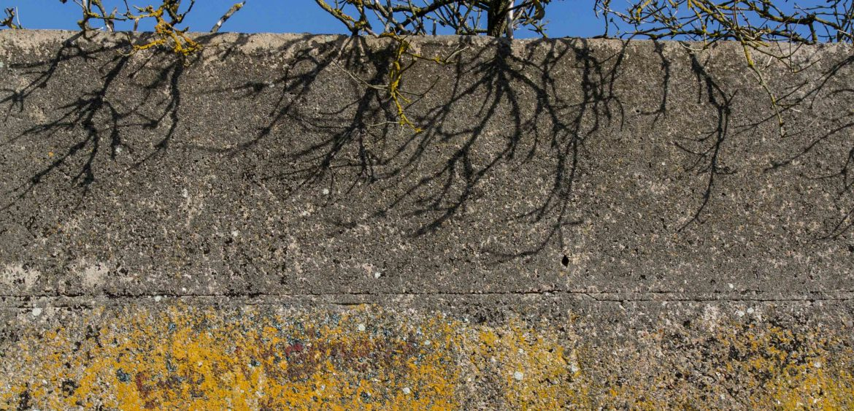 Mariya Boyanova Fotografie Foto-Projekt Mensch und Natur Wand Baum Graffity