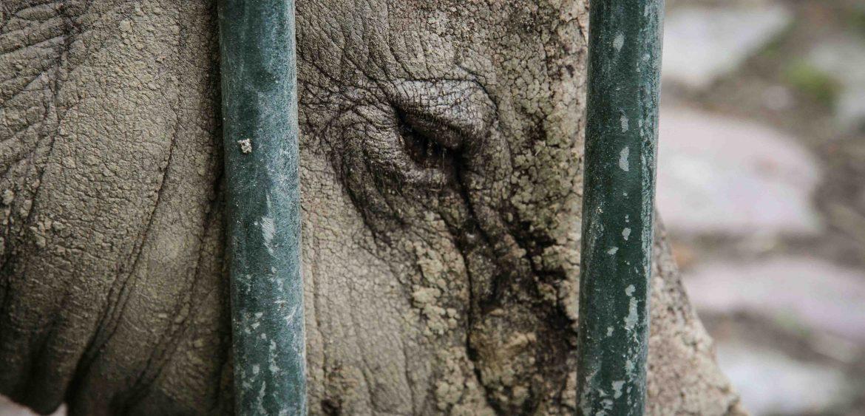 Mariya Boyanova Fotografie Foto-Projekt Mensch und Natur Hirscheber
