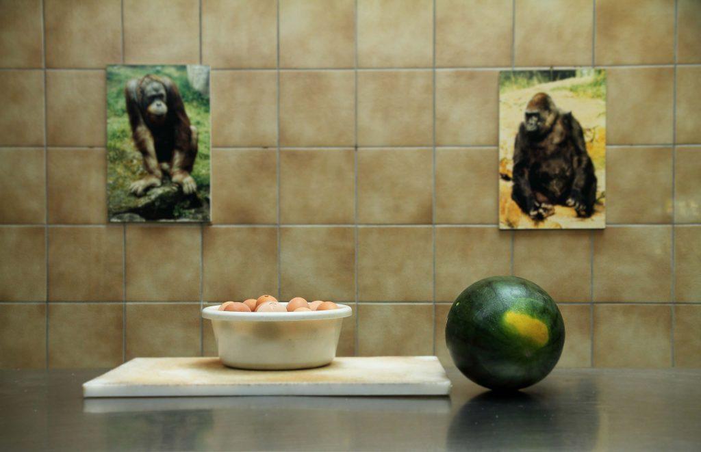 Mariya Boyanova Fotografie Foto-Projekt Mensch und Natur Zoo Affen Melone Eier