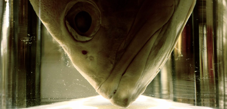 Mariya Boyanova Fotografie Foto-Projekt Mensch und Natur Fish in Glas