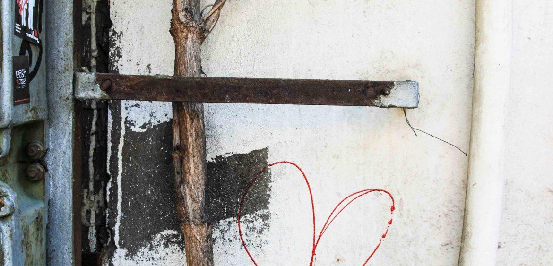 Mariya Boyanova Fotografie Foto-Projekt Mensch und Natur Wand Blume Baum