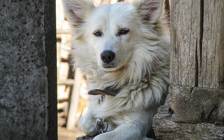 Mariya Boyanova Fotografie Foto-Essay aus einem Balkandorf Portarit Hund